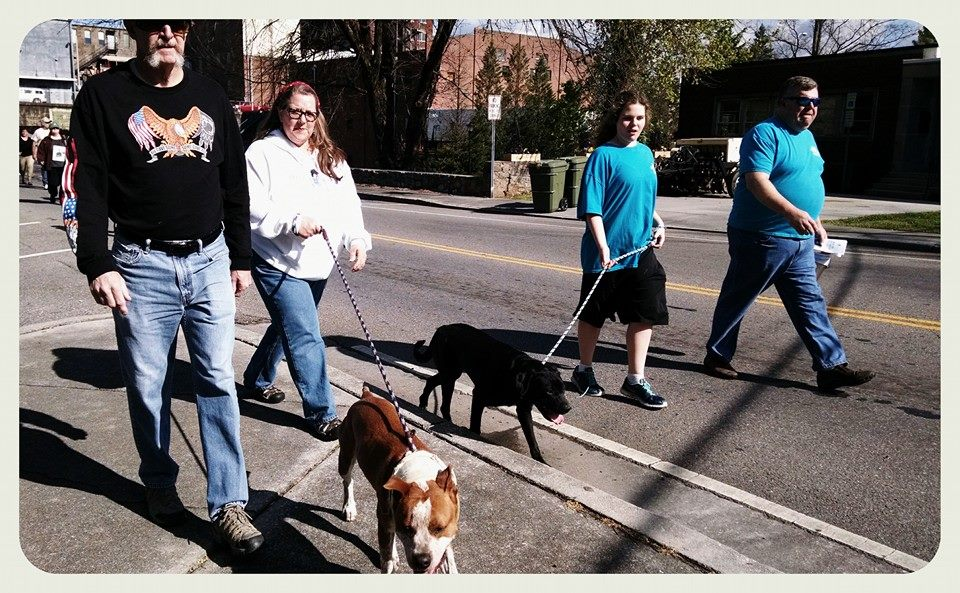 Four walkers lead two dogs down street