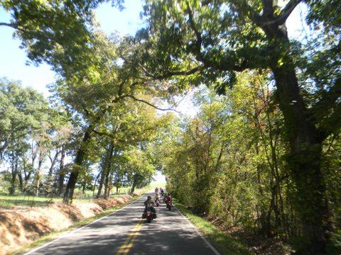 Line of motorcycles cruising through treed drive
