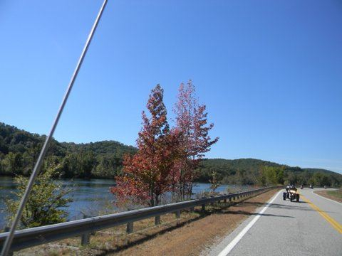 Image of red tree beside road, with motorcycle driving